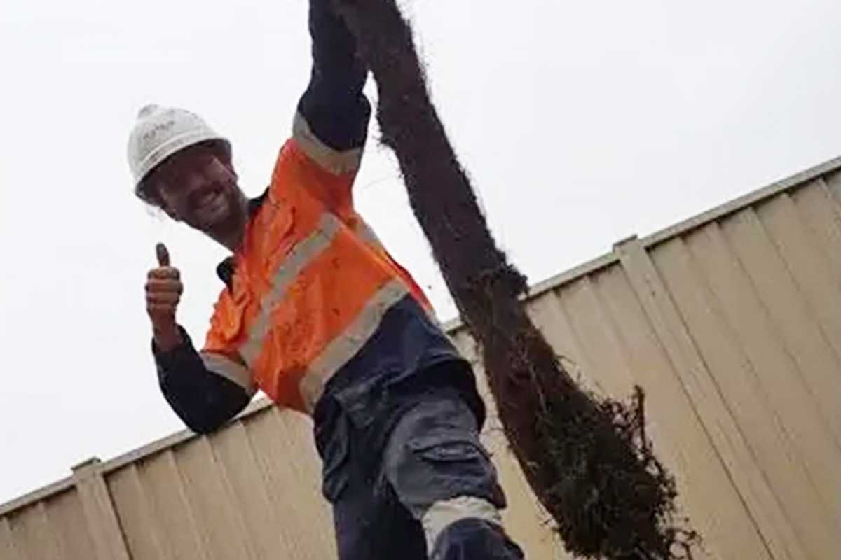 Man holding tree root from cleared sewer pipe obstruction.